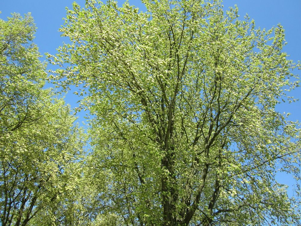 First leaves of tree