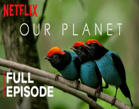 Netflix Our Planet YouTube