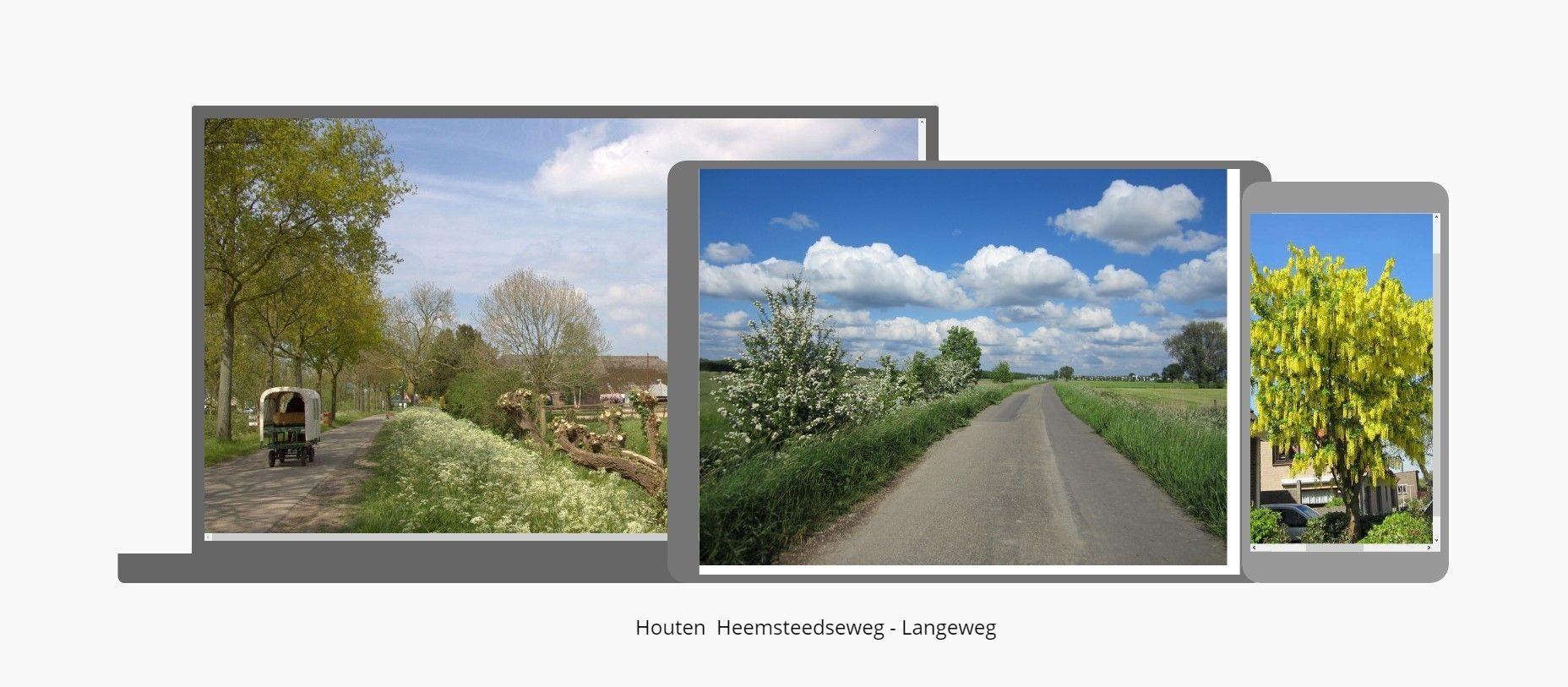 Heemsteedseweg - Langeweg - Golden rain tree